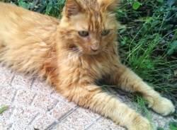 gattino birba eroe