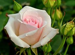 Induno Olona - Il Parco delle rose