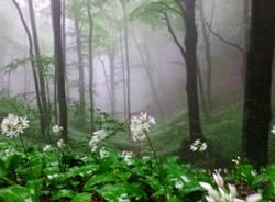 Inverno e primavera - foto di Giuseppe Marangon