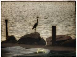 La guardia del lago - foto di Elisabetta Vitellozzi