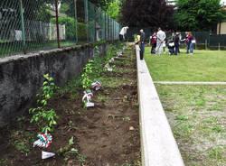orino piantati gli alberi di mela poppina