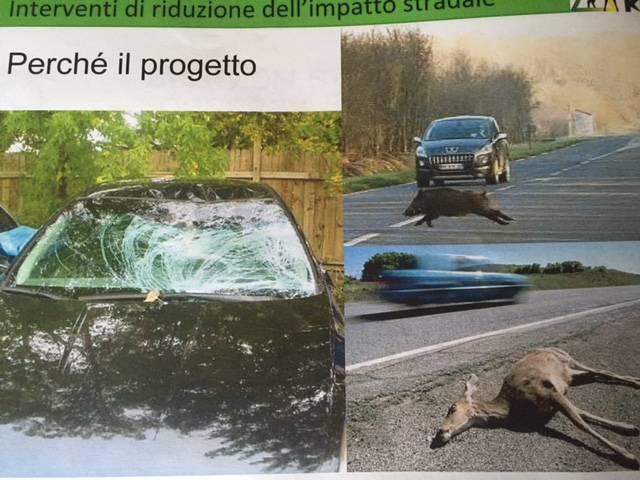 versi dei lupi per evitare gli attraversamenti stradali