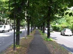 Sui viali alberati mancano centinaia di alberi - Alberi adatti per viali ...