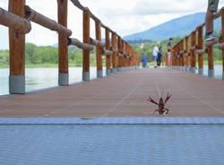 Il saluto del Gambero Rosso sul pontile