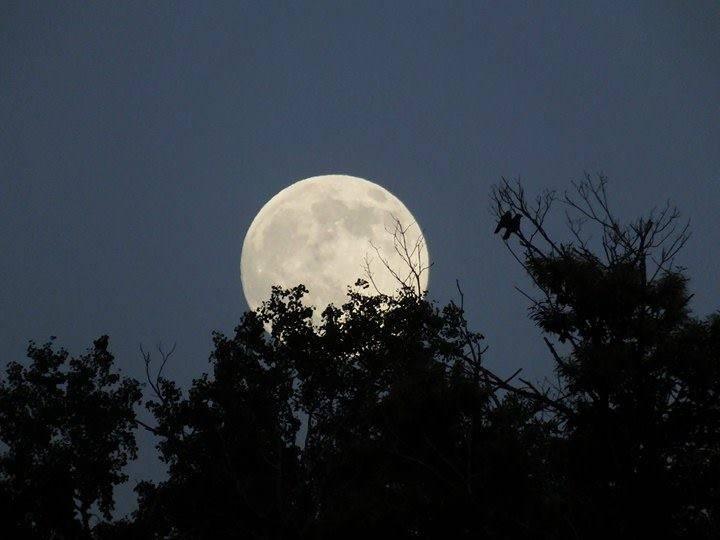 La luna di Valentina - foto di Valentina Bianchi