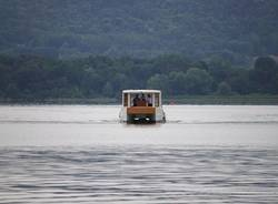 Pesce di lago all'Isolino Virginia