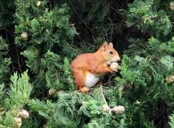 """Uno scoiattolo """"a pranzo"""""""