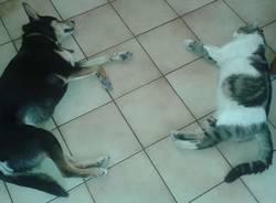 Animali - Calura a quattro zampe