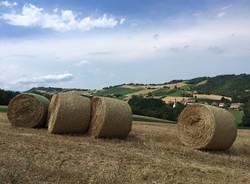 Via Francigena: Fidenza - Medesano