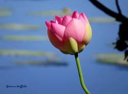 Il fior di loto non fuorilegge for Laghetti prefabbricati
