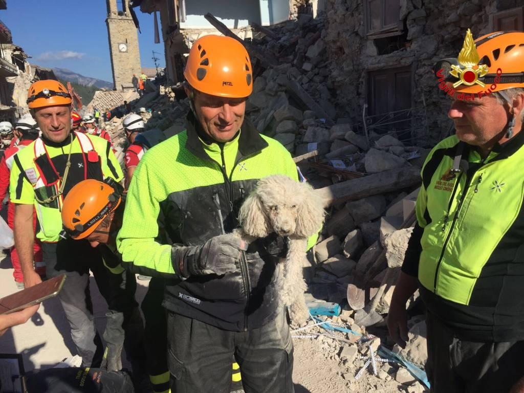 terremoto vigili del fuoco varese
