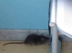 topo in sala d'attesa