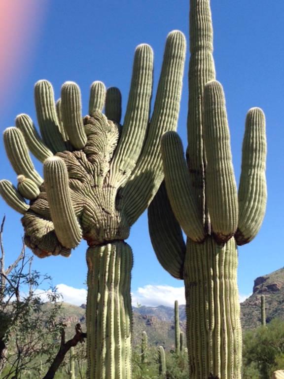 Tra i cactus dell'Arizona