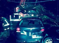 Albero cade su un'auto a Bodio Lomnago