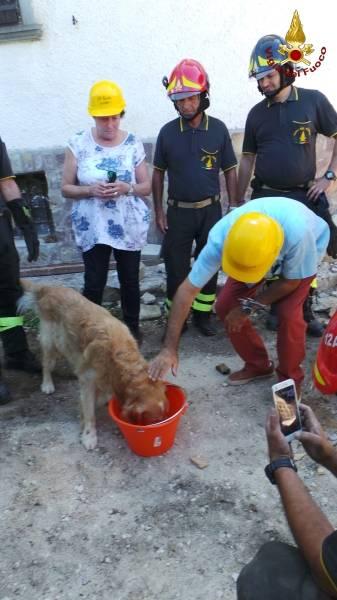 Cane salvato dalle macerie del terremoto