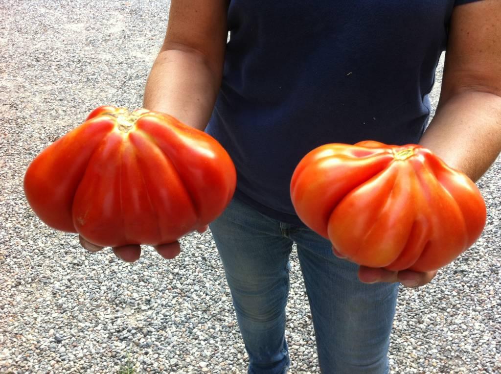 pomidoro...