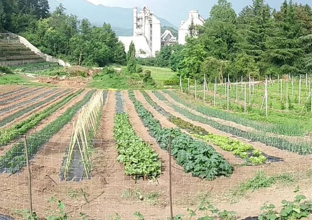 Caravate e Dumenza: laboratorio agricoltura. Cercasi volontari per nuovi laboratori