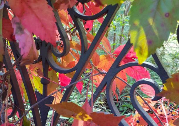 I colori autunnali di Villa Castiglioni a Induno