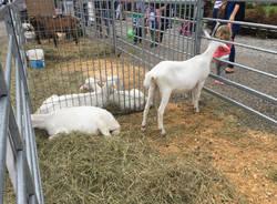 I cuccioli ad AgriVarese