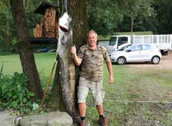 Pesce siluro di quasi 2 metri pescato nel lago di Varese