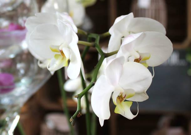 Varese Orchidea 2016