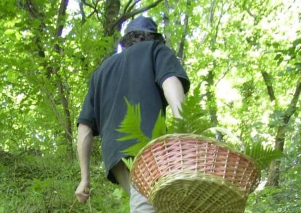 cercatore funghi
