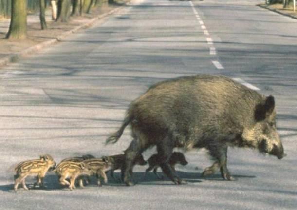 Risultati immagini per fauna selvatica