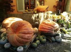 Le zucche a Santa Maria Maggiore