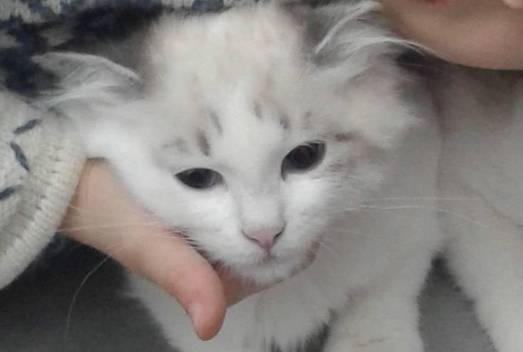 Abbiamo smarrito la gatta Minerva