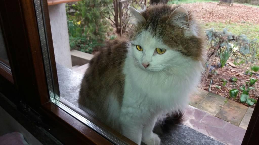 Giulietta, micia dolcissima cerca casa