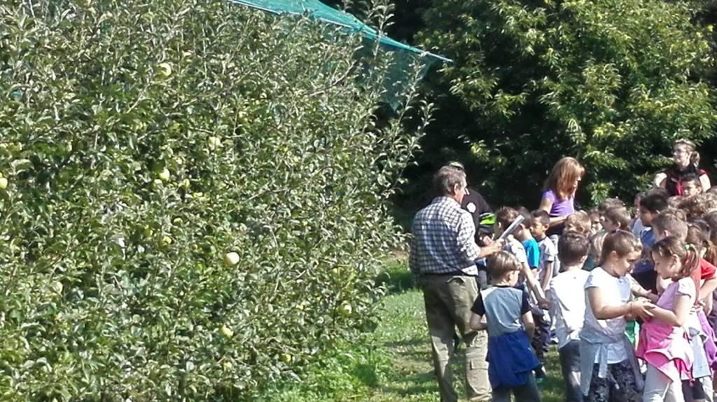 La visita al frutteto della mela Poppina