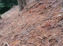 Il taglio della pineta