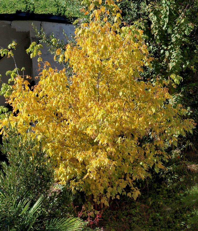 Primi colori d\'autunno