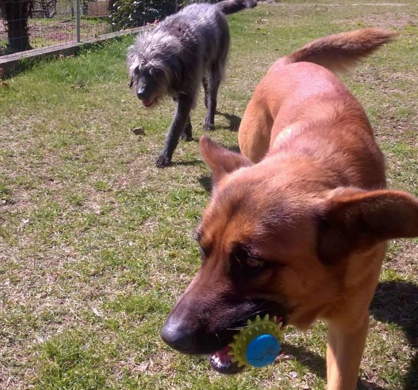Due cani spariti da Angera