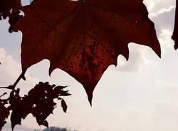 L\'autunno a Gavirate
