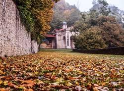 foglie sacro monte 2016