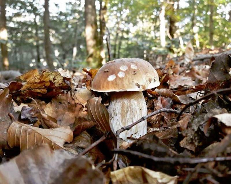 funghi 12 ottobre 2016