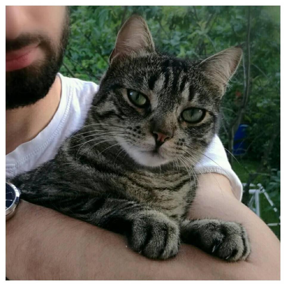 gatto Tobia Porto Ceresio