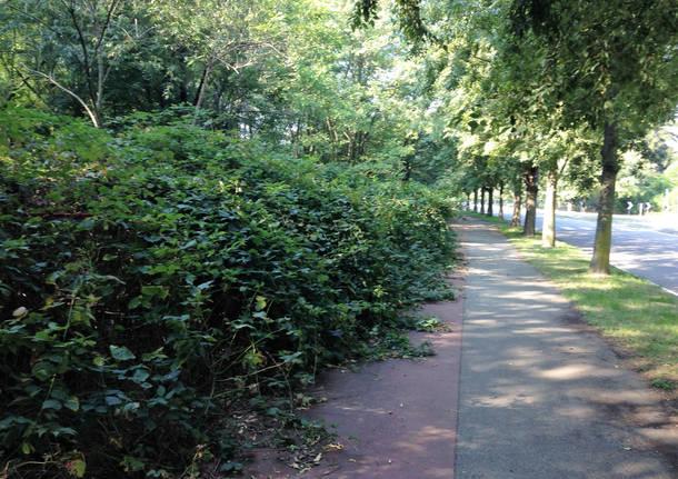Ufficio Verde Pubblico Varese : Alberi abbattuti e strade dimenticate la gestione del verde sotto