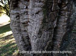 La quercia da sughero di Villa Mylius