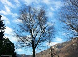 Bisuschio - festa degli alberi 2016