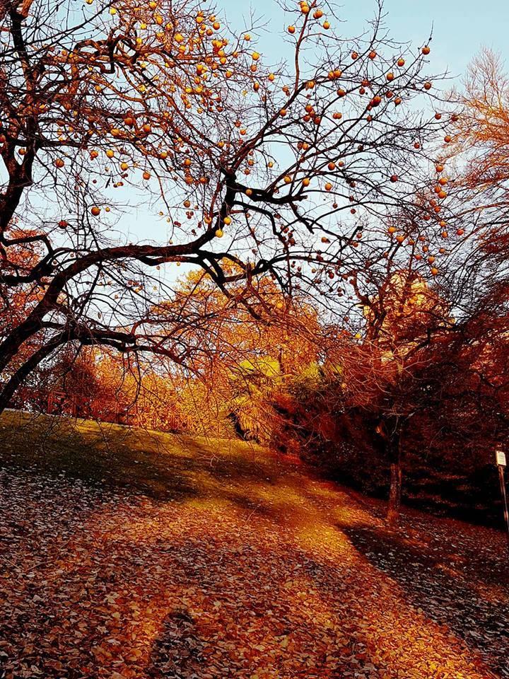 L\'autunno a Villa Toeplitz
