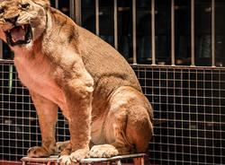 circo animali
