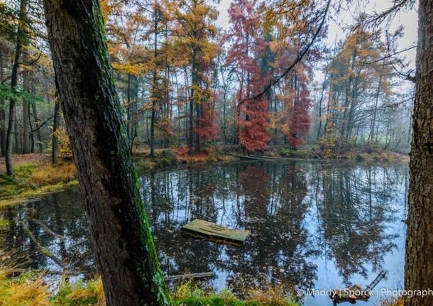 I colori del bosco d'autunno