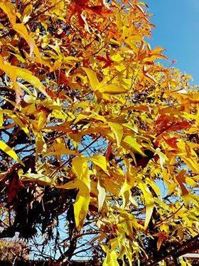 I colori di novembre