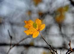 La magia delle foglie d'autunno
