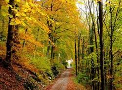 una passeggiata nel bosco
