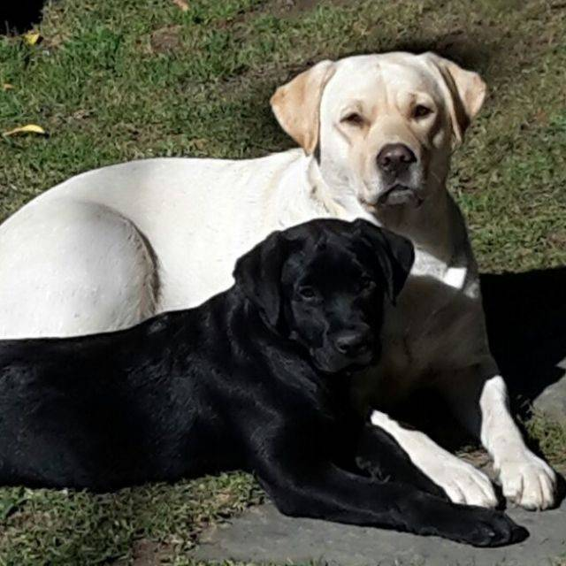 Akira e Bella
