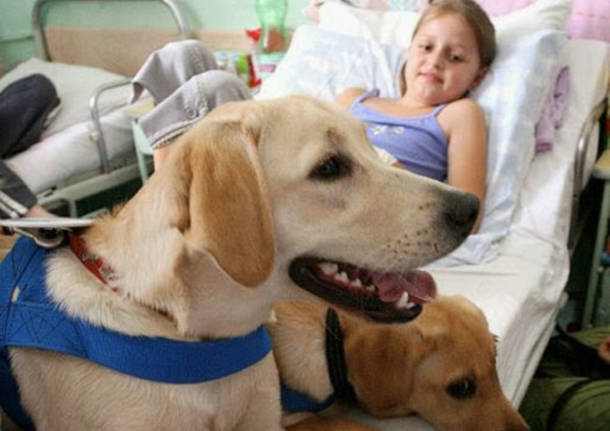 pet terapy animali ospedale
