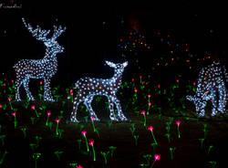 Casa di Natale a Leggiuno - 2016